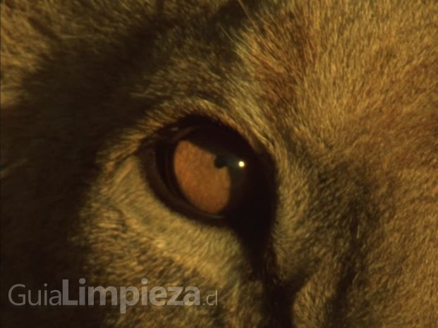 Inversiones Lion SpA